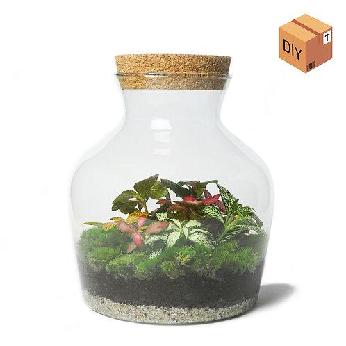 DIY Kit - Dome Medium - Kleurrijk Fittonia Terrarium