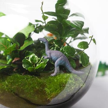 Ecosysteem, Terrarium, Dinotoop, Dinosaurus, Dinosauriër, Orb Medium3, Dino, Ficus Pumila, Biotoop, Outlandish Terrariums, Fittonia, Interieur, groen, urbanjungle, ecosysteempje