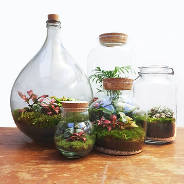 Ecosysteem, Terrarium, Wijnfles, Inmaakpot, Orb Small, Dome large, Carboy, Led Lamp Kurk, Gezellig, Dome Medium, Biotoop, Outlandish Terrariums, Fittonia, Interieur, groen, urbanjungle, ecosysteempje, Maarten Smets