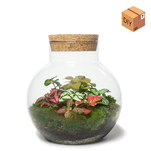 DIY Kit - Orb Medium - Kleurrijke Fittonia Terrarium