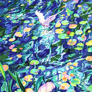 수련 Water Lily