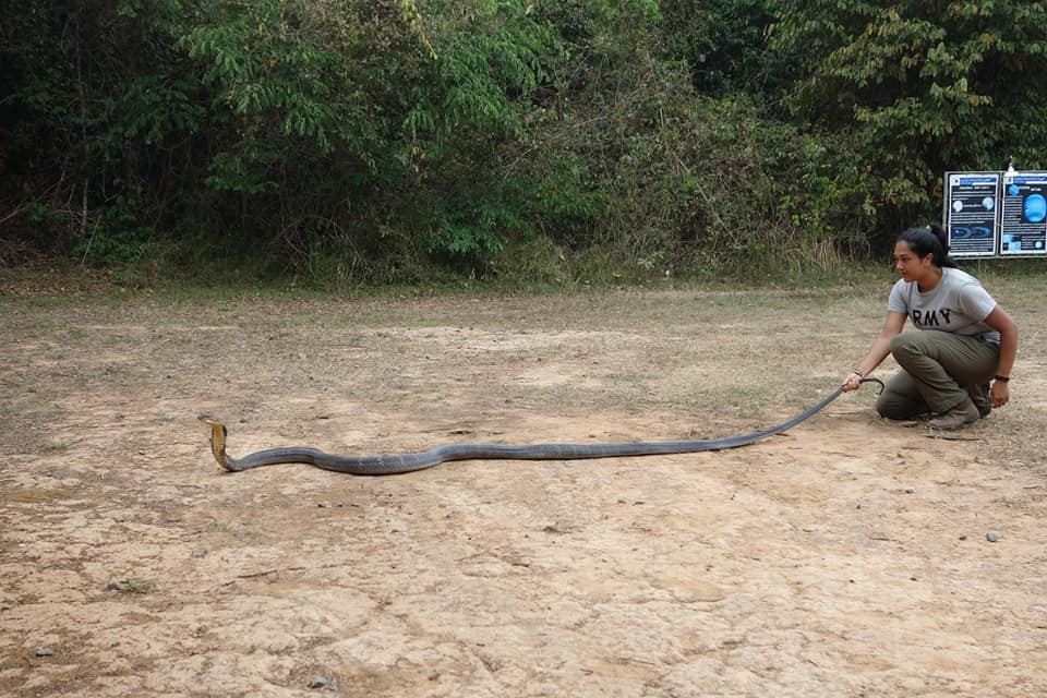 This is ,one of the largest recorded at Sakaerat Environmental Research Station, Thailand but I did enjoy my experiences with other individuals.