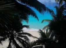 Volunteer blog - Conservation in the Seychelles