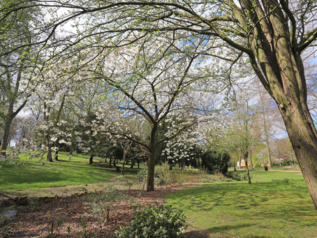 Bluesky National Tree Map Helps Daventry District Council Plan Ground Maintenance