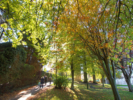 Wiltshire Council uses Bluesky National Tree Map to Manage Public Tree Stock