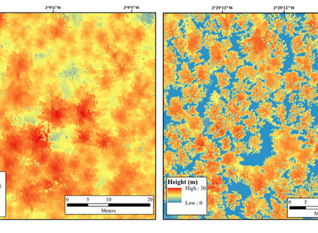 Bluesky LiDAR Maps Used to Monitor the Spread of Deadly Tree Disease