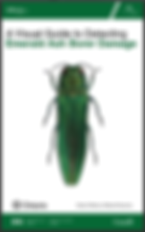 A Visual Guide to Detecting Emerald Ash Borer Damage