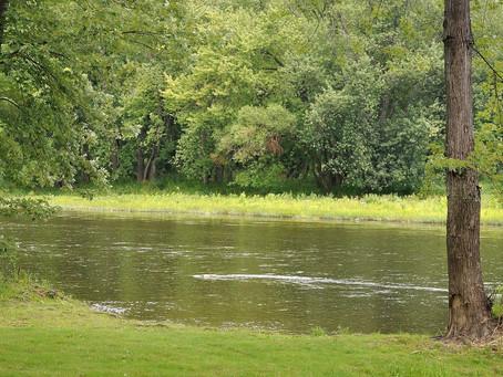 Conservancy Treats Terrestrial Invasive Species Along Important Waterway