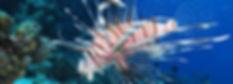 Bighead carp (Hypophthalmichthys nobilis)