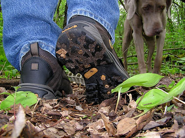 Clean off invasive species from your outdoor gear - Tips for trail users