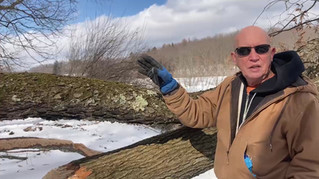 Peter Walker discusses beaver activity and lichens