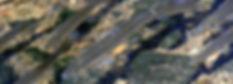 Rainbow smelt (Osmerus mordax)