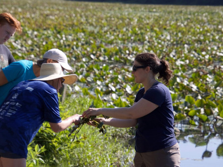 Paddle with a Purpose: Water Chestnut Management in Upper Bucks County