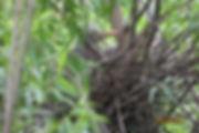 2017-06-20_green heron.jpg