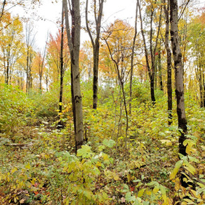 Building Forest Resilience in Northwest Pennsylvania