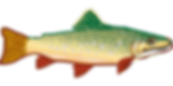 Trout fish_Pixabay.png