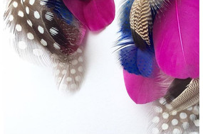 Feather accessory
