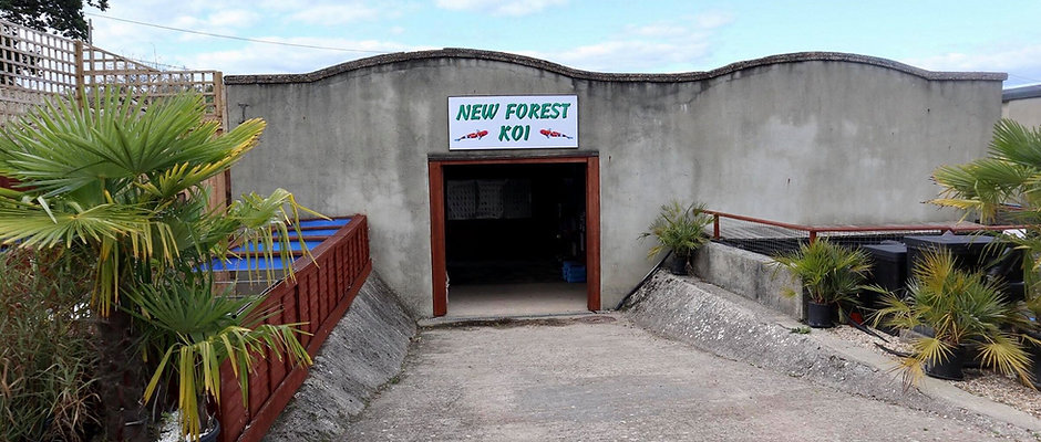 New Forest Koi Gift Voucher
