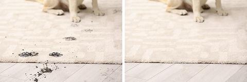 Dog sitting with muddy paw prints on car