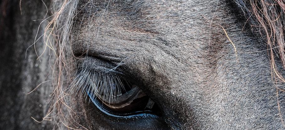 Pferd - Kühn Pathologie