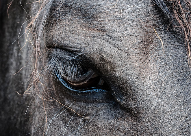 Horse Therapy, Therapeutic Devices and Treatments