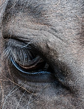 relaxed horses eye after massage