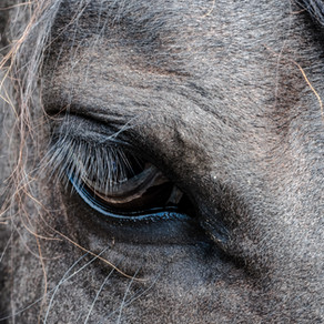 The Horse's Eye - What can they see?