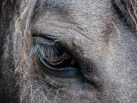 Horse Law: Legal Entities For Horse-Related Businesses and Protection Against Personal Liability