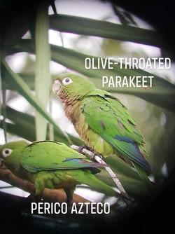 perico birding.jpg