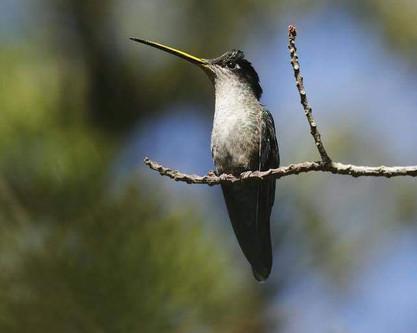birding 3.jpg