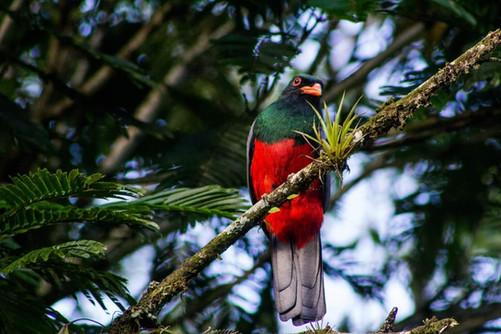 birding 4.jpg