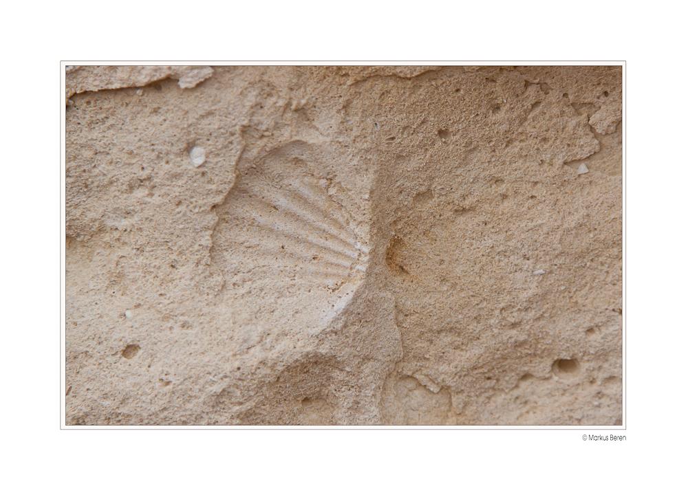 Muschel im Stein_Gozo 01_2012-