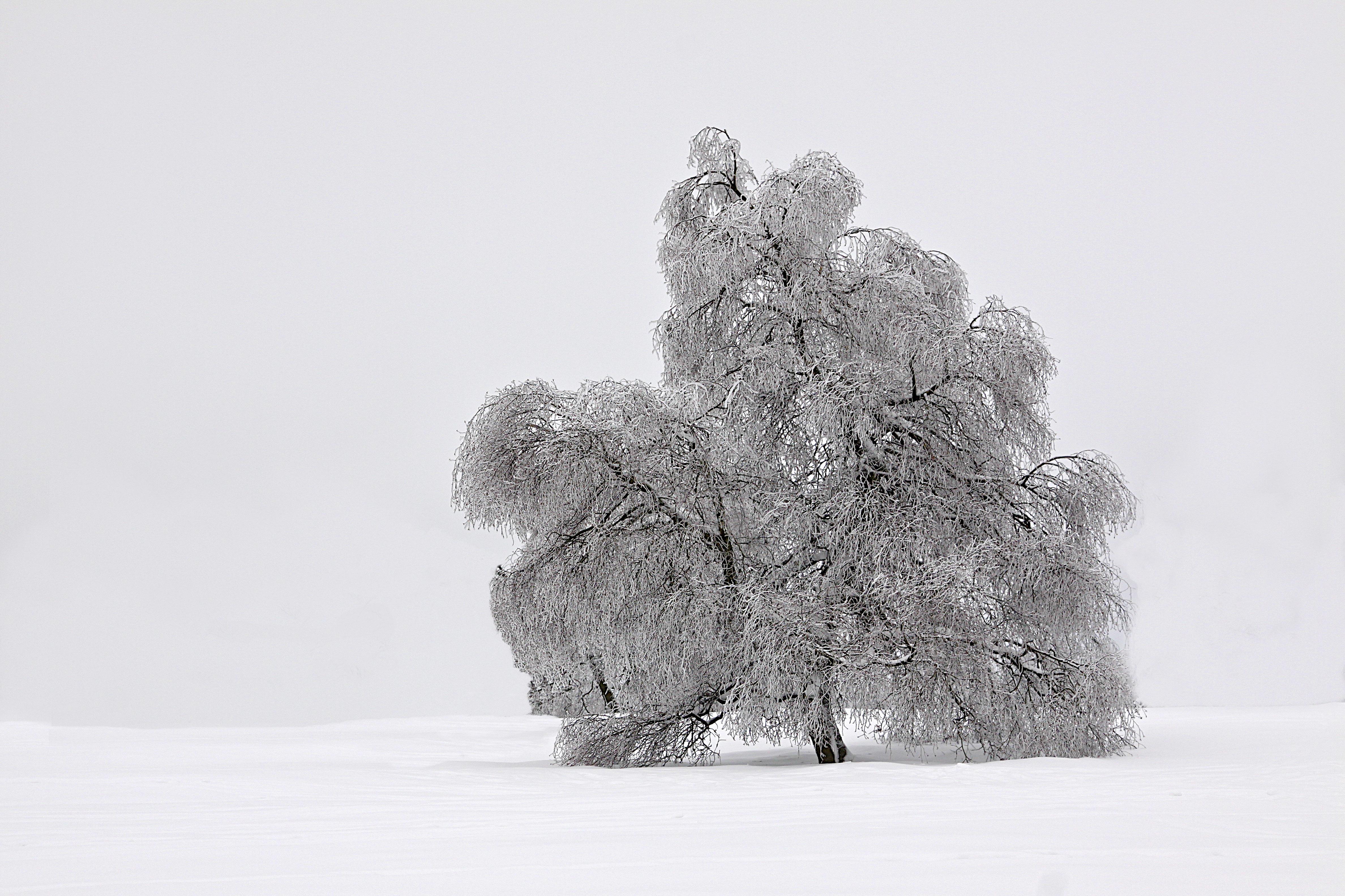 4448_Freier Baum_Belgien