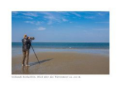 Seehunde beobachten _Marianne