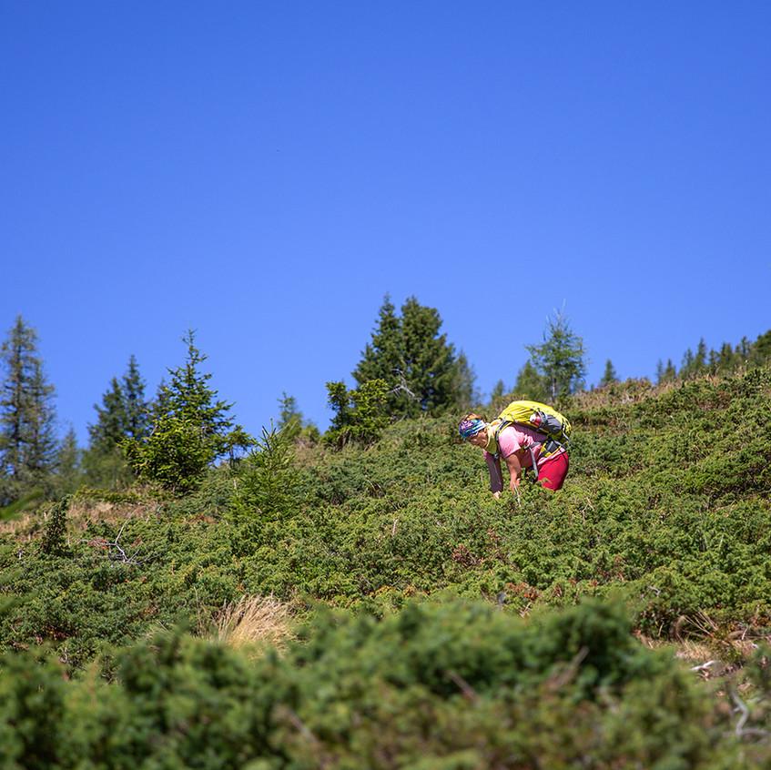 Alpen-Wacholder_2A8A2741