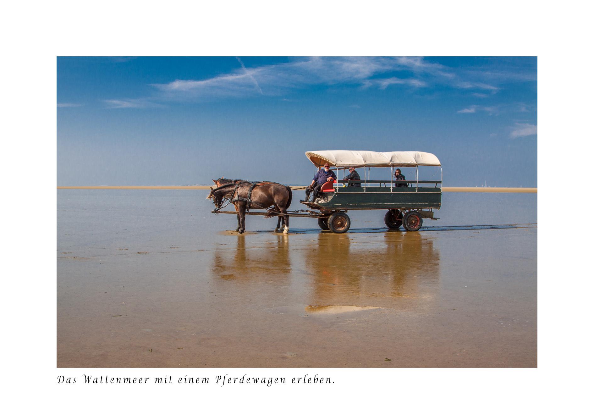 Pferdewagen Wattenmeer