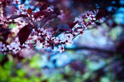 Christine Gordon_spring.jpg