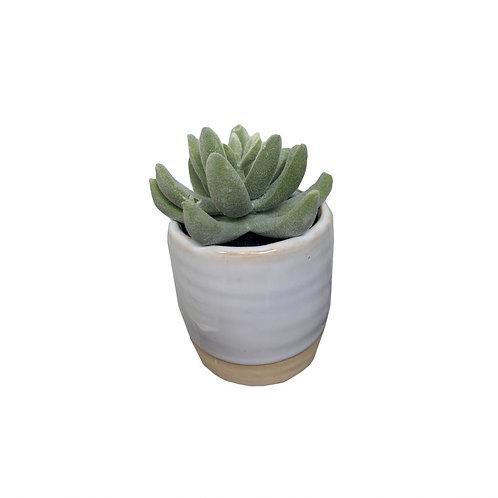 Small Ceramic Succulent [QTY6]