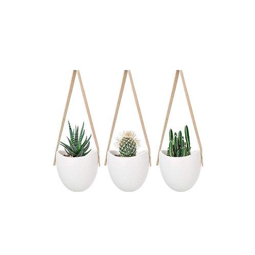 """Hanging Succulents [QTY24, 3""""H x 4""""W x 3.5""""D]"""