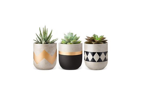 Tribal Gold Succulent Set [QTY14 Sets, Must be purchased in sets of 3]