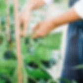 WheelerFarmsGarden+Planting-SarahAnneRis