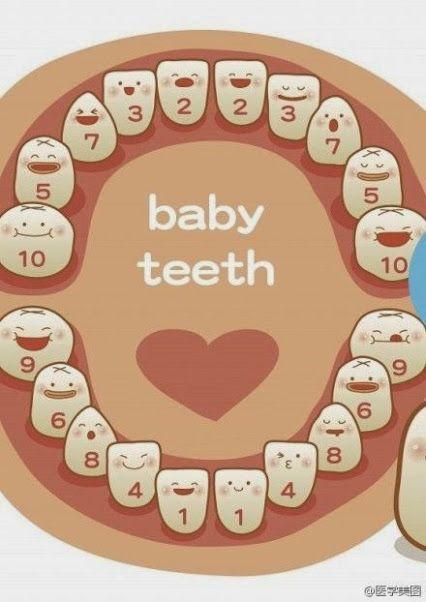 Baby Teeth Growing Sequence