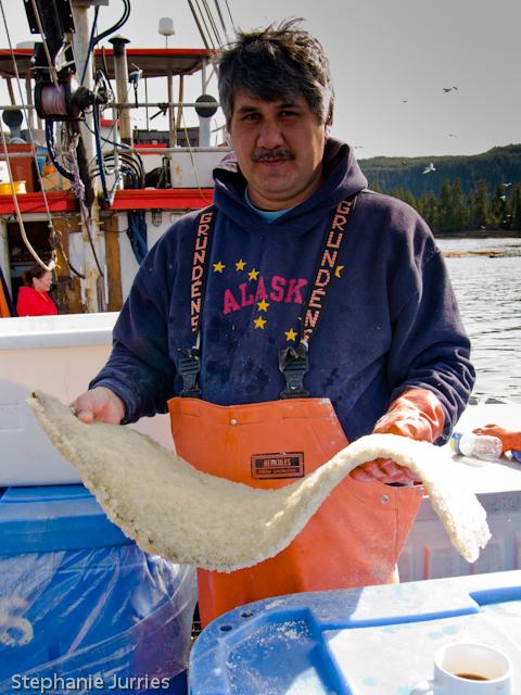 Herring Roe on Kelp