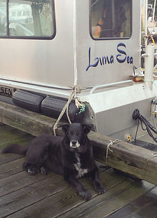 Luna the dog and Luna Sea the boat.