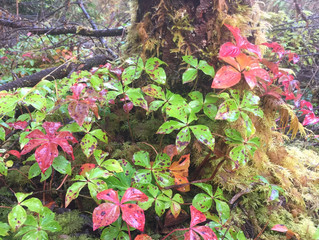 Signs of fall in southeast Alaska
