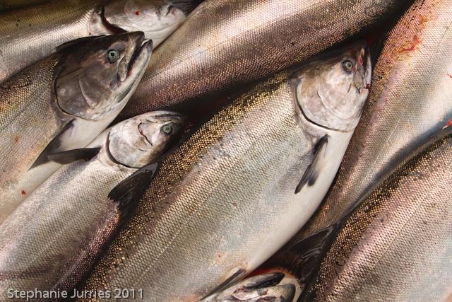 King Salmon-