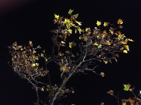 Tree BQ 1.JPG