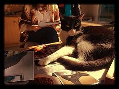 Amigo gatuno en el curso de telepatía con animales