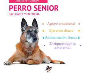 Perros Senior la edad dorada