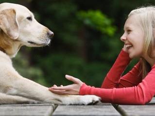 La coherencia, clave principal de la comunicación con animales.